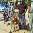 Stock Photo: Donkey with cart for hire