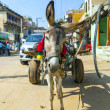 Donkey with cart — Stock Photo