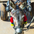 Donkey with cart - Stock Photo