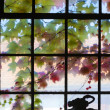 Old window in harmonic colors with ivy growing at outside — Stock Photo #19077345