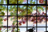 Old window in harmonic colors with ivy growing at the outside — Stock Photo