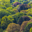 Stock Photo: Forest seamless pattern from above.
