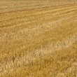 Acres after harvest are looking golden — Stock Photo