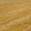 Acres after harvest are looking golden — Stock Photo #19519255