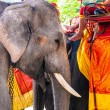 Stock Photo: Elephants for tourist rides at old part of Ajutthaya