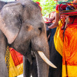 Elephants for tourist rides at the old part of Ajutthaya — Stock Photo