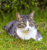 cute cat relaxing in the garden — Foto de Stock