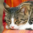 Cute cat sleeping on a couch — Stock Photo