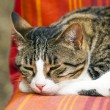 Cute cat sleeping on a couch - Stock Photo
