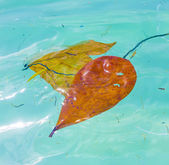 Leaves are swimming in the water and give a wonderful harmonic s — Stock Photo
