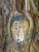 Buddhas head in Mahathat temple is covered by roots of a tree — ストック写真
