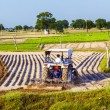 Tractor plows the field - Stock Photo