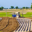 Tractor plows the field — Stock Photo