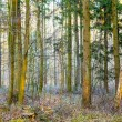 Pattern of trees in forest — Stock Photo #21901767