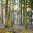 Pattern of trees in forest — Stock Photo #21901887