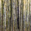Pattern of trees in forest — Stock Photo #21902175