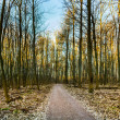 Harmonic pattern of trees in forest with path — Stock Photo #21902747