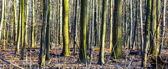 Wzór drzew w lesie — Zdjęcie stockowe