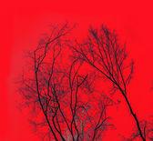 在蓝蓝的天空下树木之冠 — 图库照片