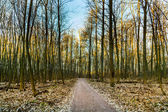 Harmonic pattern of trees in forest with path — Stock Photo