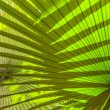 Beautiful palm leaves of tree in sunlight — Photo