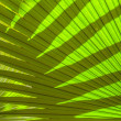 Beautiful palm leaves of tree in sunlight — Stock Photo