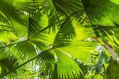 Vackra palm blad av träd i solljus — Stockfoto