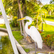 Stock Photo: White heron walking on balustrade of veranda