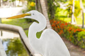 White heron walking on the balustrade of the veranda — Stock Photo