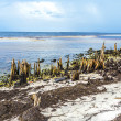 Bizarre old rotten trees at the coast — Stockfoto