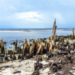 Bizarre old rotten trees at the coast — Foto Stock