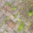 Stock Photo: Old tiles at sidewalk with plants in joints
