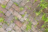 Old tiles at the sidewalk with plants in the joints — Stock Photo