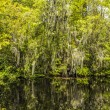 Stock Photo: Undergrowth and roots of Mangrove trees In Everglades Nation