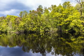 Undergrowth and roots of Mangrove trees In the Everglades Nation — Stock Photo