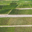 Beautiful vineyards at  the rhine valley in Ruedesheim — Stock Photo
