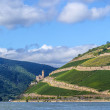 Ehrenfels castle in the vineyards of the Rhine valley — Stock Photo #31893837