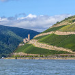 Stock Photo: Ehrenfels castle in the vineyards of the Rhine valley