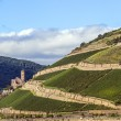 Ehrenfels castle in the vineyards of the Rhine valley — Stock Photo