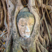 Buddhas head in Mahathat temple is covered by roots — Stock Photo