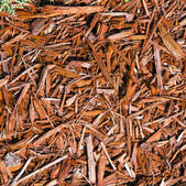 Background of natural wood shavings — Stock Photo