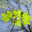 Leaves at a branch of the tree — Stock Photo
