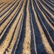 Background of plowed field  — Stock Photo