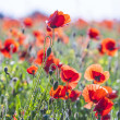 Стоковое фото: Beautiful colorful meadow with flowers