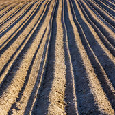 Background of plowed field — Foto Stock