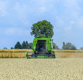 Harvester in corn fields — Stock Photo