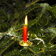 Stock Photo: Burning candle at the green christmas tree