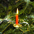 Burning candle at the green christmas tree — Stock Photo