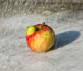Fresh apples with funny deformations — Stock Photo