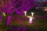 Winterlichter in the palmgarden — Stock Photo